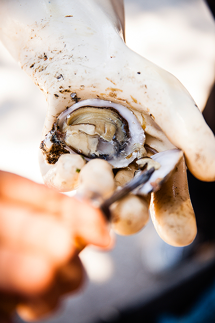 Amanda_Hibbert_Photography_food_editorial_oysters_seafood__MG_8023_sRGB_DesignX
